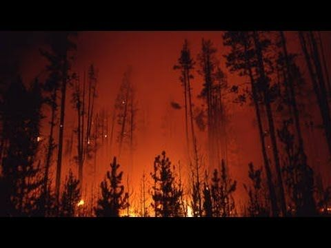 Use with WonderWorks Gr 5, Unit 5, Week 3: The Story Behind the Yellowstone Fires of 1988 | Retro Report | The New ...