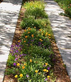 A driveway can grow flowers, too. If you have one of those 2 strip concrete driveways, plant some small flowers in the center to add color.