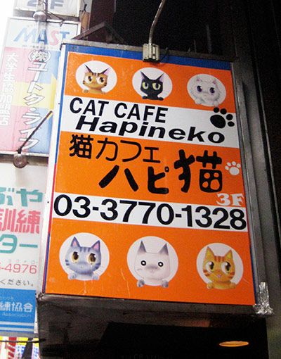 Tokyo Cat Cafe Katy Perry
