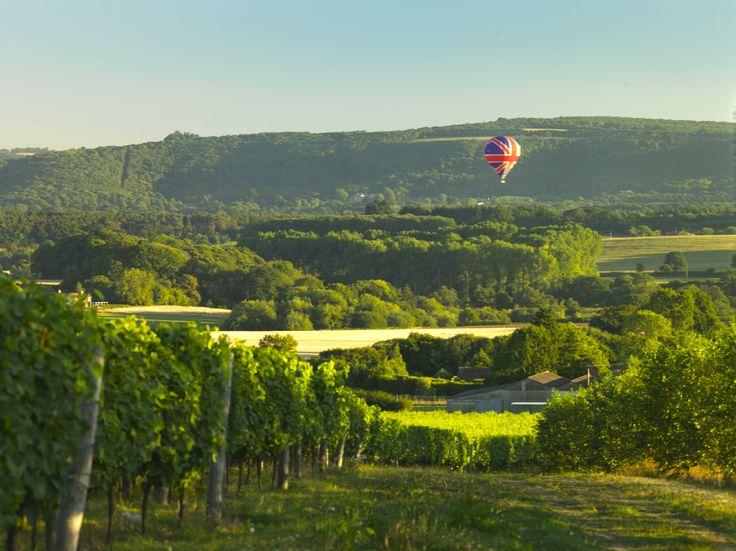 Nyetimber's Tillington vineyard in West Sussex #EnglishWine www.bcfw.co.uk