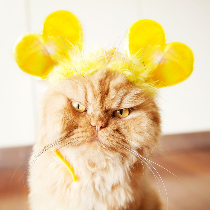 Best Garfi Cat Angry Cat Images On Pinterest Angry Cat - Garfi is officially the worlds angriest cat