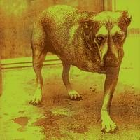 Alice in Chains Alice In Chains Album Review | Rolling Stone