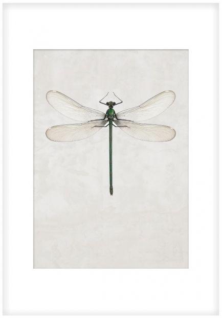 tavla med trollslända. Tavlor med insekter. Posters med djur.