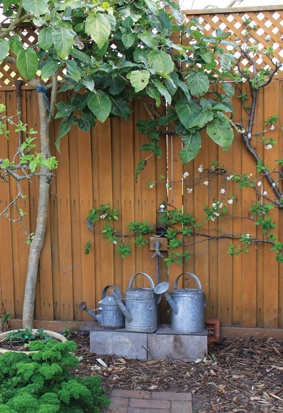 An espaliered apple tree in a garden featured in summer Gippsland Country Life.