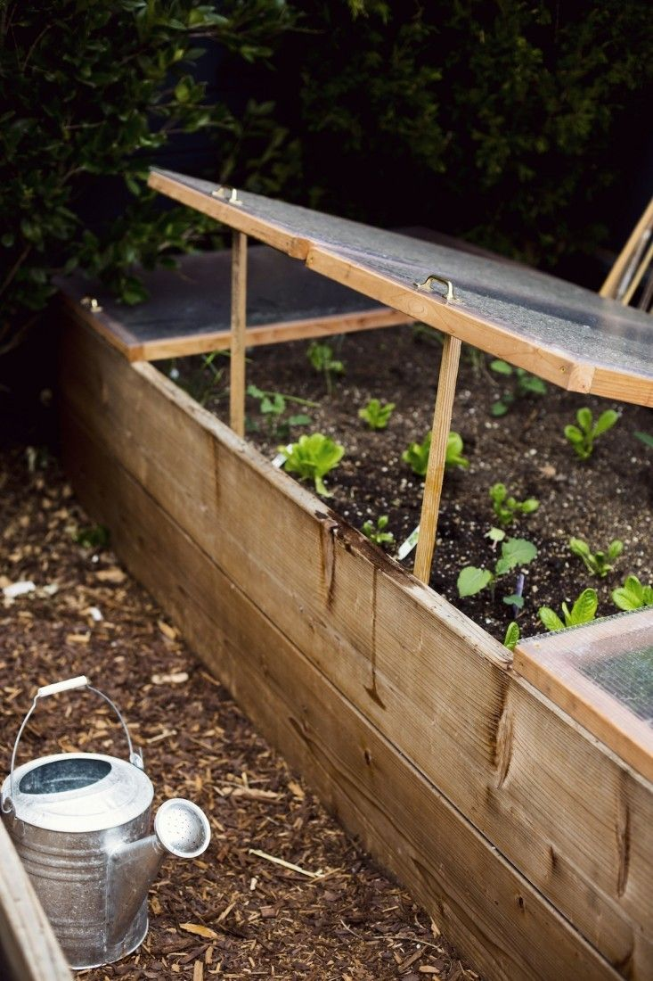 Lettuces in a backyard cold frame