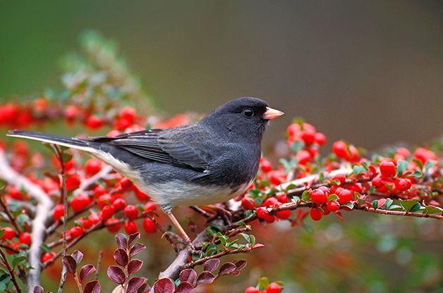 La atracción de aves y vida silvestre en condiciones meteorológicas extremas