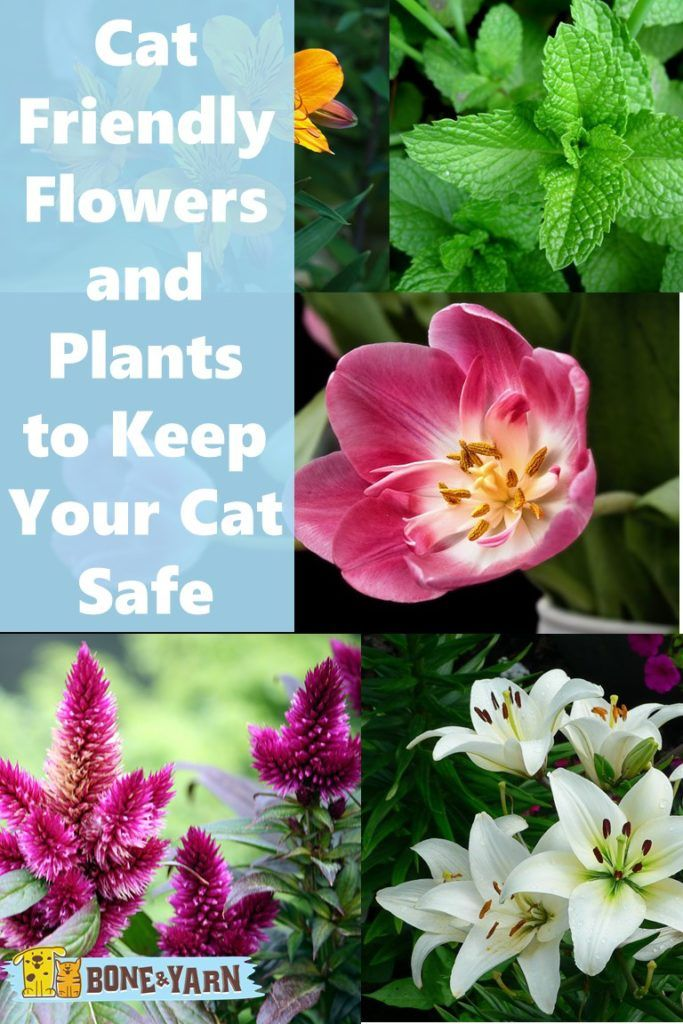 Cat Friendly Flowers And Plants To Keep Your Cat Safe Cat