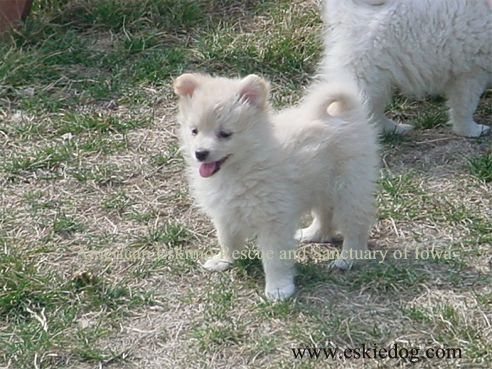 American Eskimo Dog Rescue & Sanctuary, Useful information