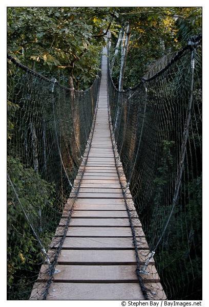 Jungle canopy bridge, Amazon, Peru