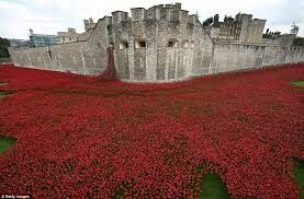 Tower of London Moat with Poppies