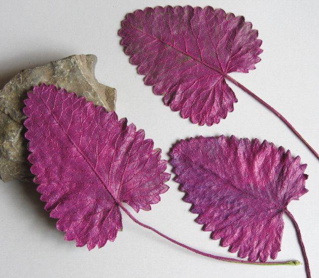 Floristikdeko - Pflanzenblätter in Magenta beidseitig handgefärbt - ein Designerstück von mARgriTs-Atelier bei DaWanda