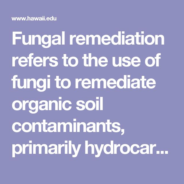 Fungal remediation refers to the use of fungi to remediate organic soil contaminants, primarily hydrocarbons. One group of fungi, Phanerochaete chyrsosporium , or white-rot fungus, produces a family of enzymes called lignin peroxidases, or ligninases, which have extensive biodegrative properties. Remediation of soil using white-rot fungus has been tested in both in situ and reactor-based systems.