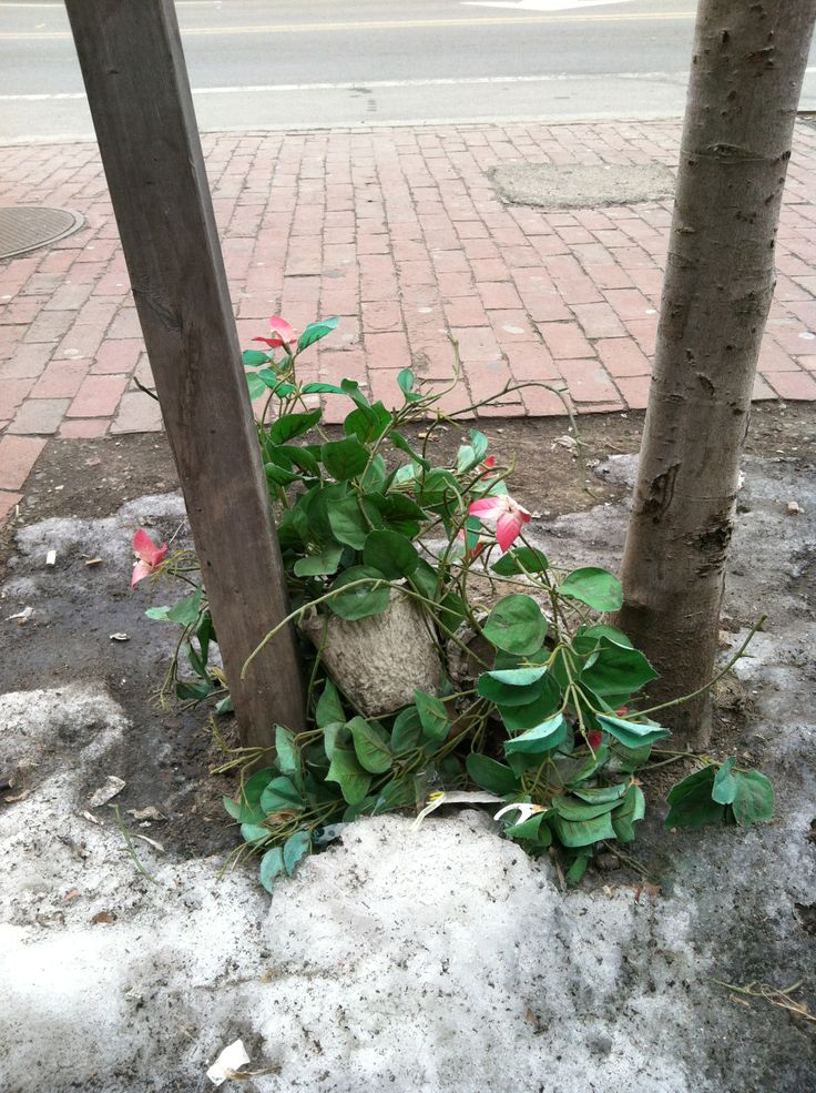 """We're really ready for Spring...  Looks like someone really can't wait, as this """"flower"""" appeared along Mass. Ave. recently (it's only early March...so it's fake).  But we love it! www.veggiegalaxy.com"""