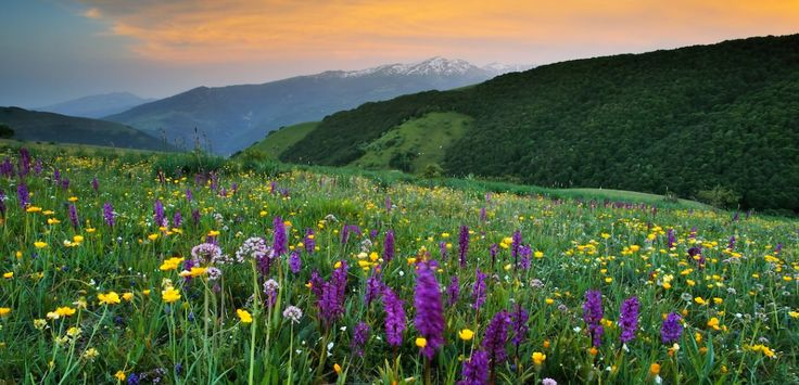 March 2017 - EU project to promote the concept of rewilding