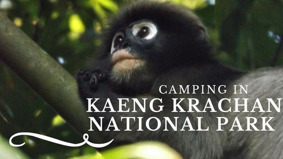 The second day of our trip to Kaeng Krachan national park, including how to visit it.