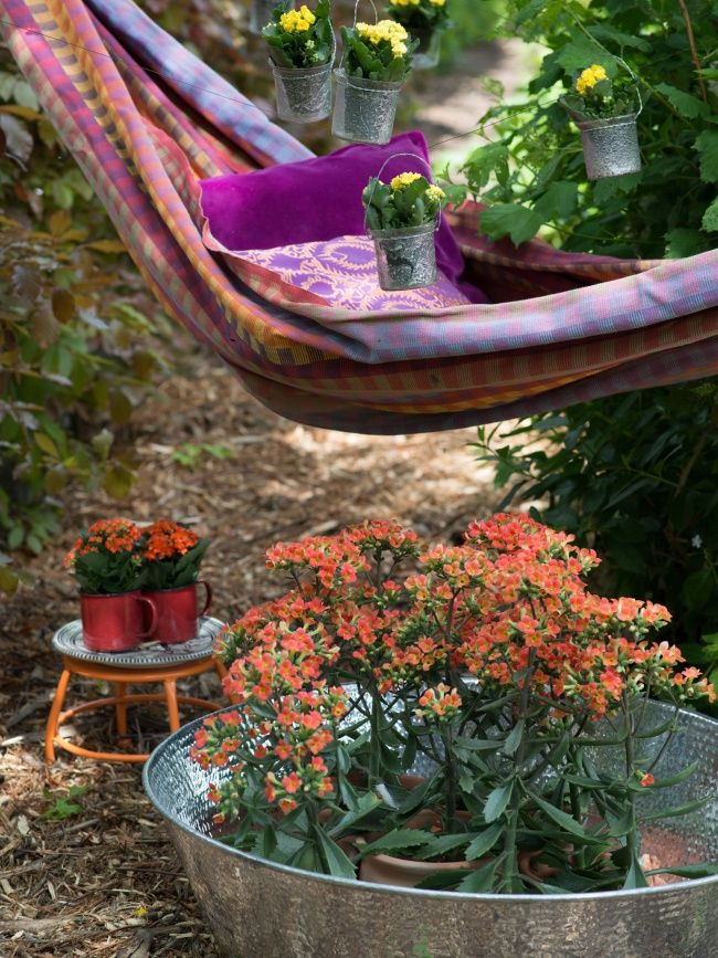 Schwebende Kalanchoe #pflanze #plants #kalanchoe #pflanzenfreude #pflanze #planters #pflanzen