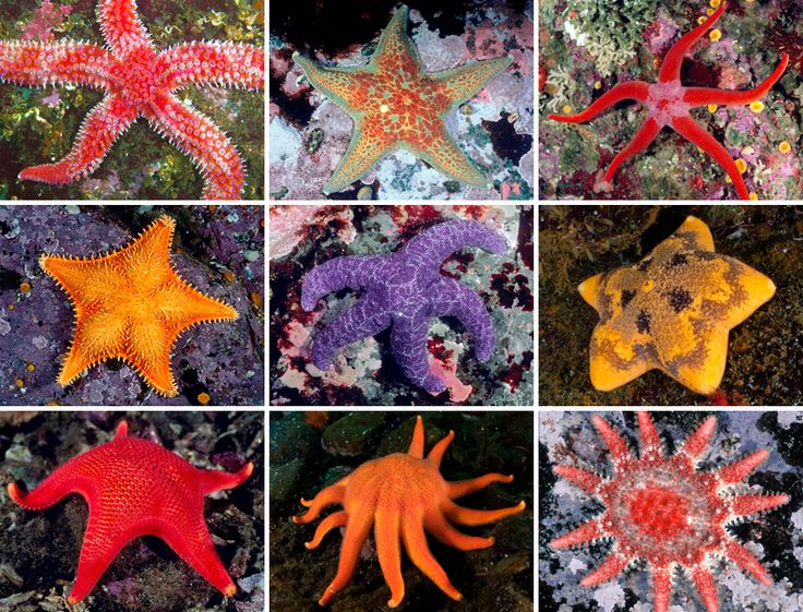 There are more than fifty species of sea stars in British Columbia's coastal waters