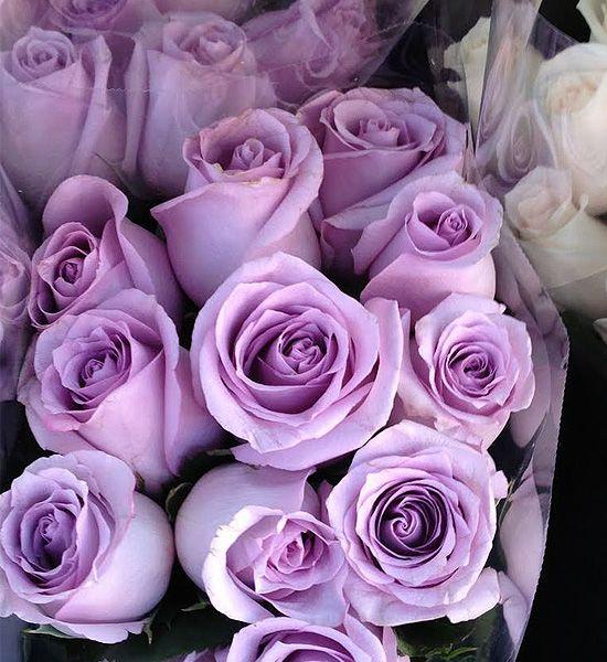 что картинки сиреневые розы был лучший