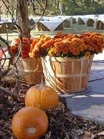 I like the mums in the basket. Pretty fall decorations
