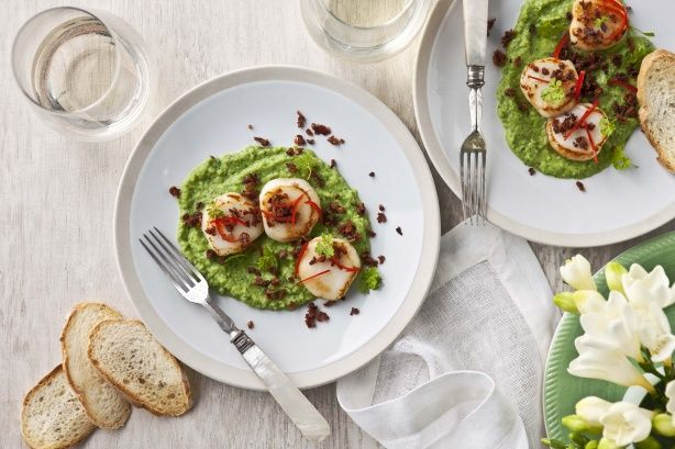 Seared scallops with pea puree and pancetta dust main image