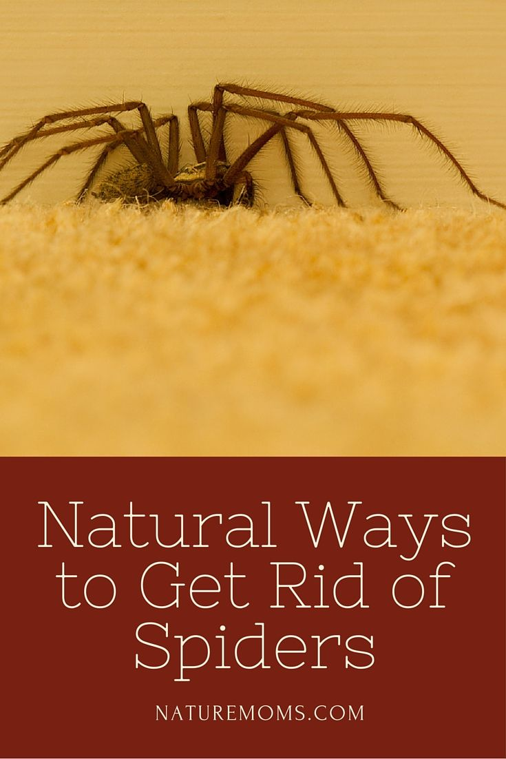 natural ways to get rid of spiders nature moms it is