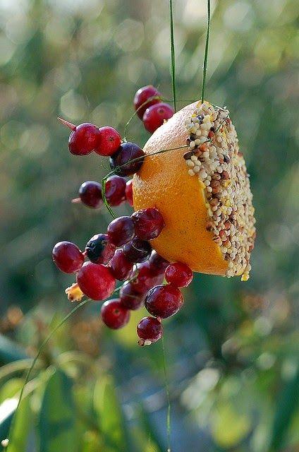 Backyards Click: Great Bird Feeder!