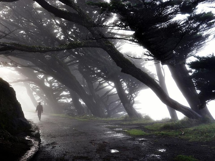Mysto trees - Cambria