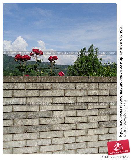 Красные розы и зеленые деревья за кирпичной стеной, фото № 23188642, снято 28 мая 2016 г. (c) DiS / Фотобанк Лори