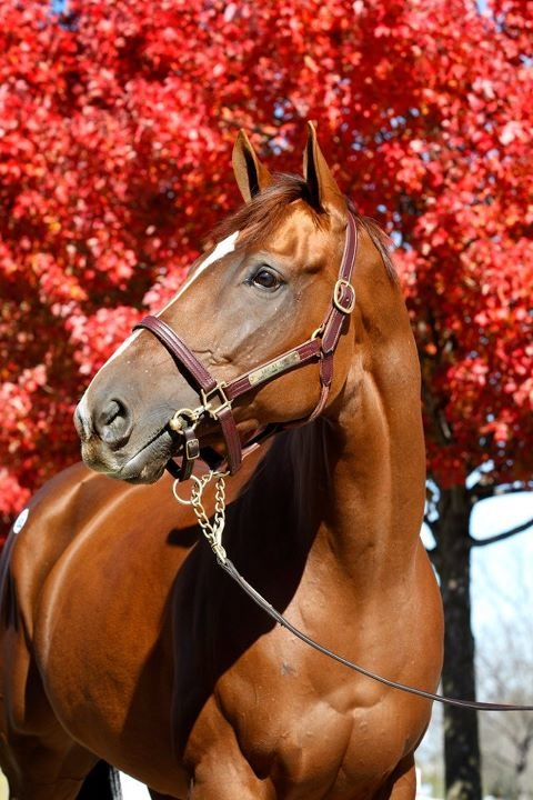 Life at Ten at Keeneland: Dreams Horses, Beautiful Horses, Chestnut Horses, Red Leaves, Beuty Hors, Pretty Horses, Hors 3, Hors Beautiful, Hors 7