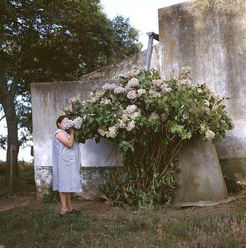 Alessandra Sanguinetti the adventures of guille & belinda