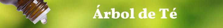¿Para qué sirve el aceite de Árbol de Té? Todos sus usos