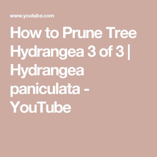 How to Prune Tree Hydrangea 3 of 3 | Hydrangea paniculata - YouTube