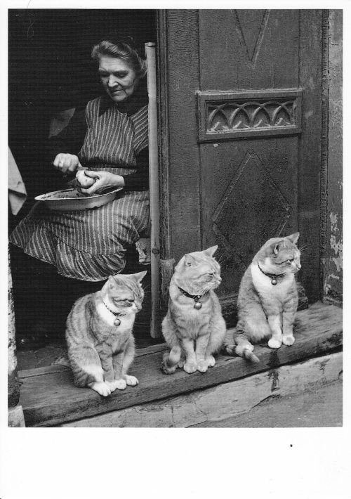 Toni SCHNEIDERS :: Familienbild [family picture] Lübeck, 1950  #cat