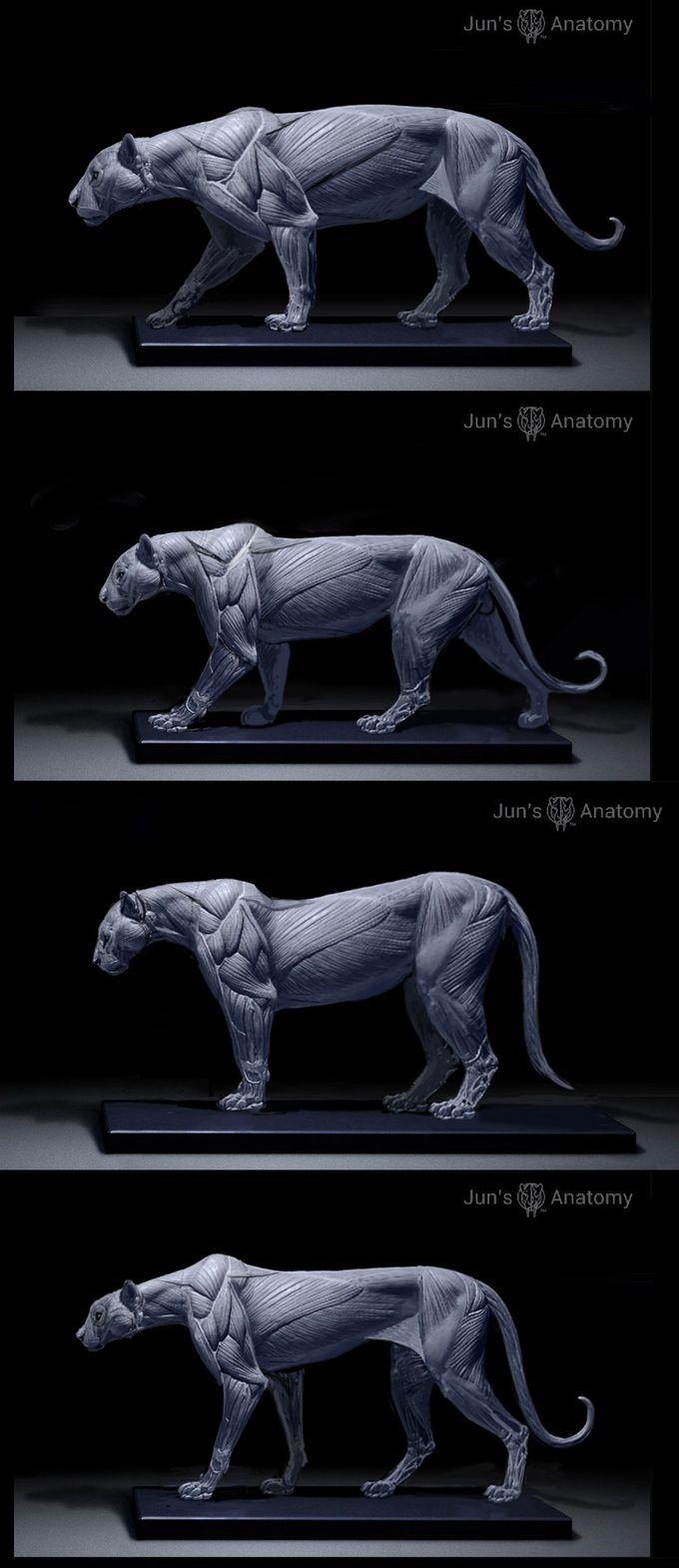 jaguar, leopard, cougar, cheetah