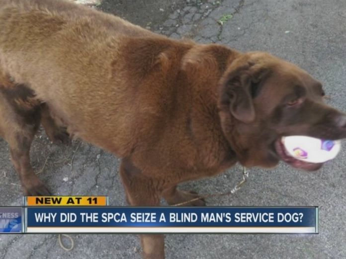 The Erie County SPCA has removed a Buffalo man's guide dog after repeatedly asking him to build a dog shelter. Read more