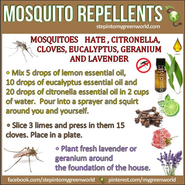 ☛ By popular demand the best mosquito repellents: They work!!!!  1. MOSQUITO SPRAY REPELLENT:  http://www.stepintomygreenworld.com/greenliving/mosquito-spray-repellent-recipes/  2. LIME MOSQUITO REPELLENT:  http://www.stepintomygreenworld.com/healthyliving/around-the-home/lime-and-cloves-mosquito-repellent/  ✒ Share | Like | Re-pin | Comment