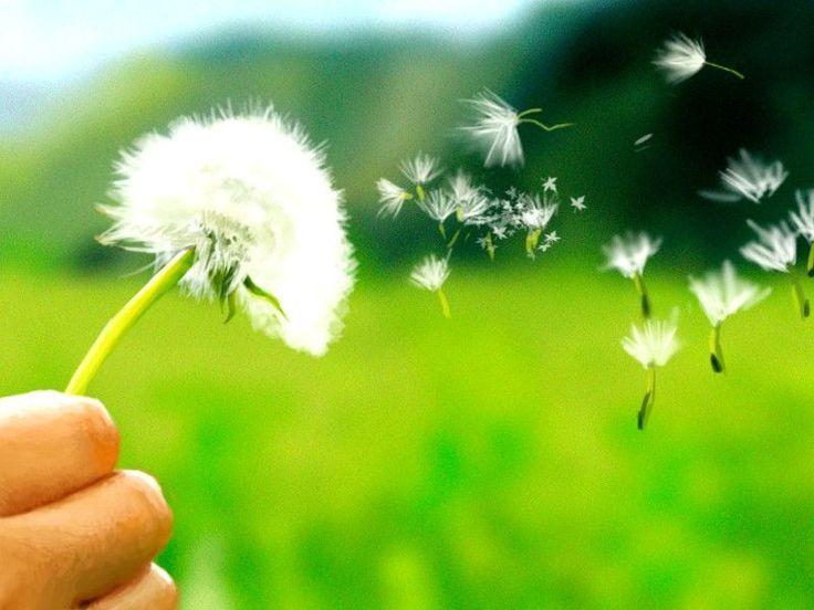 Siete alla ricerca di rimedi naturali per l'allergia al polline? Ecco come fare per avere sollievo.