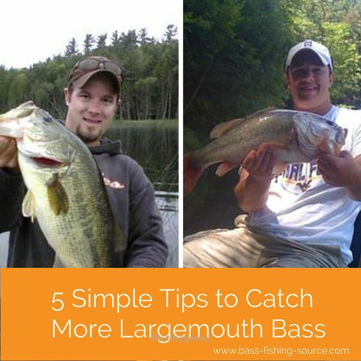 Follow Us To See More Bass Fishing Tips