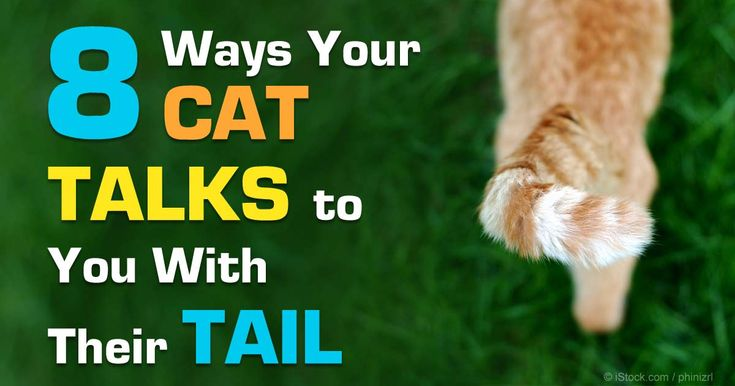 Here are a few tips to help you interpret signals your cat's tail can reveal. http://healthypets.mercola.com/sites/healthypets/archive/2015/01/03/cat-tail-language.aspx