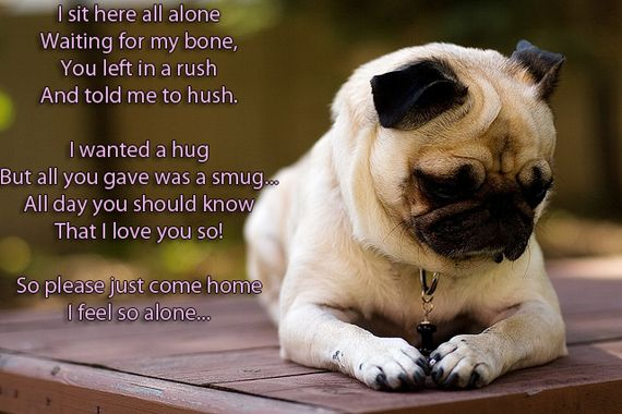 Little Poem Of A Lonely Pug To My Master Now Go Spend