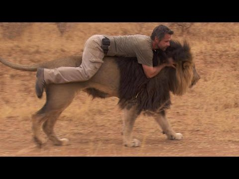 You'll Never Guess What Just Happened | The Lion Whisperer - YouTube