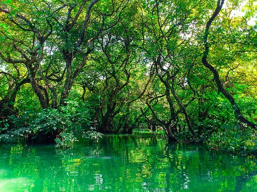 Ratargul Swamp Forest is a freshwater swamp forest located in ...