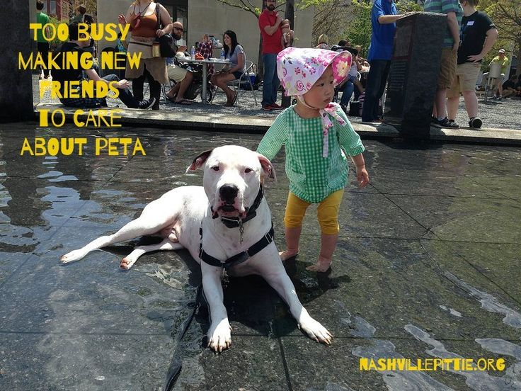 Peta wants to EUTHANIZE ALL PIT BULLS! Joined an Anti-Pitbull Coalition! Stop this madness now! | YouSignAnimals.org