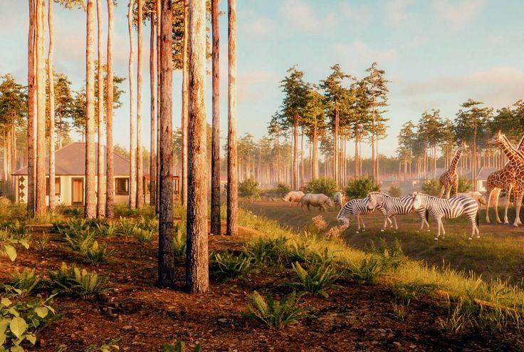 In Safari Resort Beekse Bergen zijn straks sfeervolle boomhutten te vinden! Deze ervaring wil je toch niet missen?