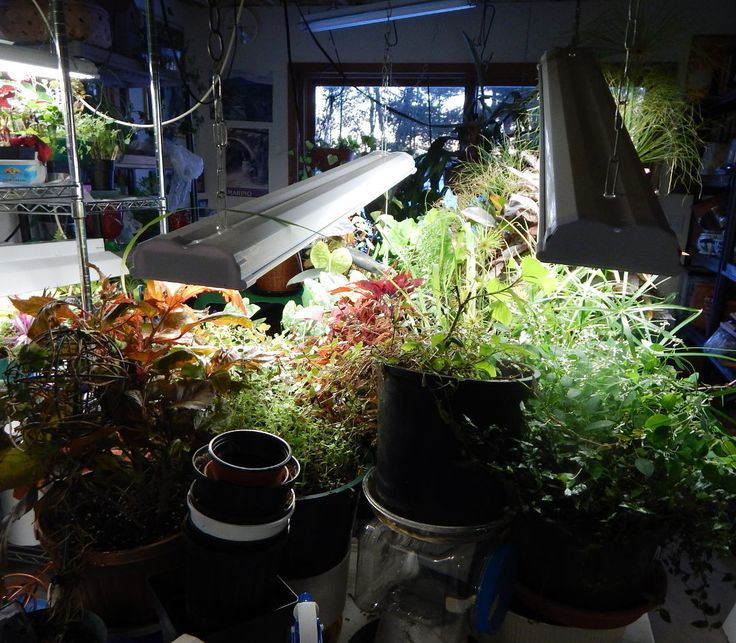 How To Turn A Basement Into, How To Turn Your Basement Into A Greenhouse