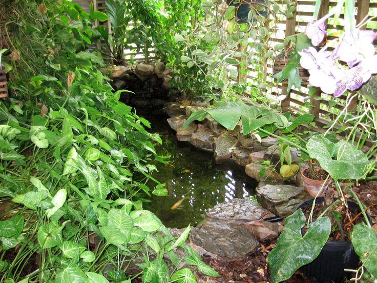16 best indoor ponds images on pinterest ponds indoor for Indoor botanical gardens