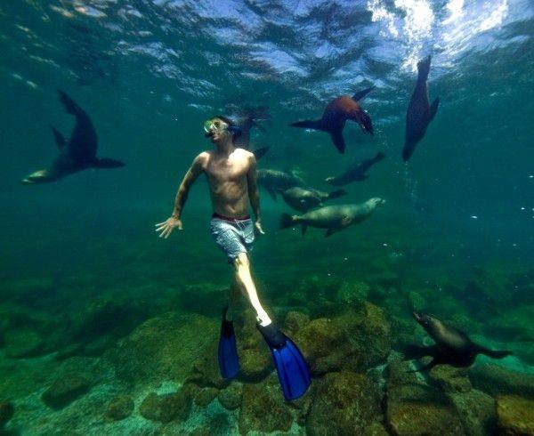 Sea lions at Los Islotes!