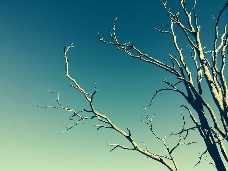 There's something mystical about a dead gumtree on a clear day