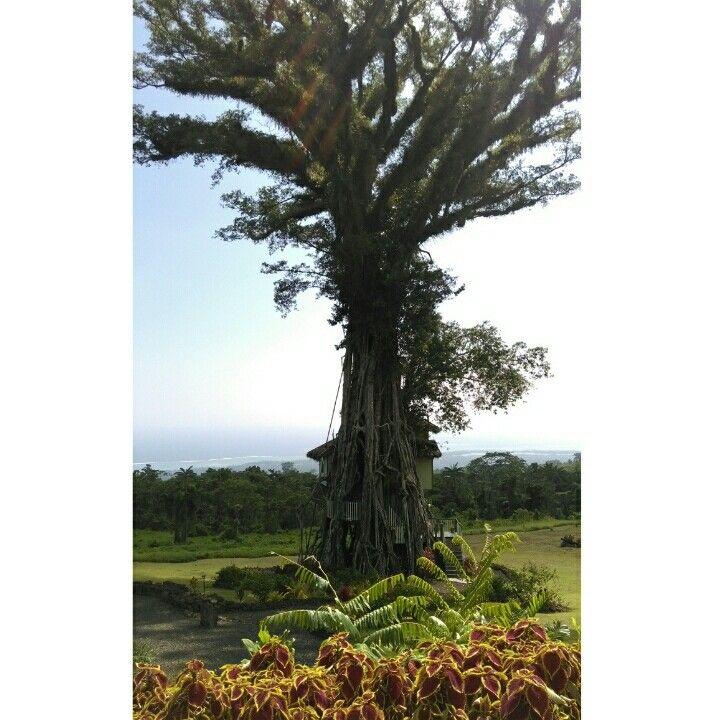 Lupesina Treesort in Upolu. Samoa and architecture at its best #Samoa #HouseInATree #Lupesina #Treesort #Upolu #Samoa