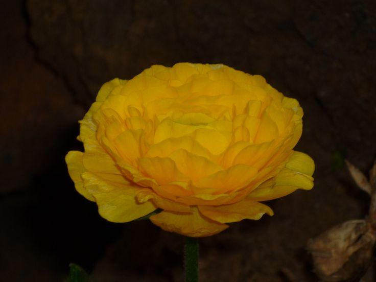 Blumenel Knüpfen Anleitung 14 besten flor bilder auf schöne blumen blumen pflanzen